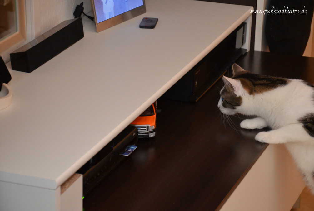 katzengesichert regal diy katze springt auf den fernseher. Black Bedroom Furniture Sets. Home Design Ideas