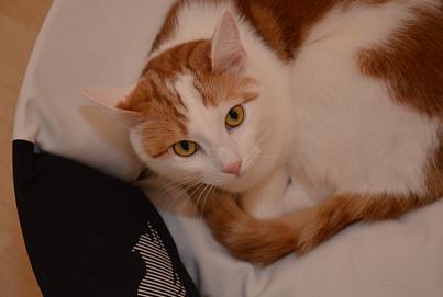 Katzenbett OTI von My Kotty Beitragsbild