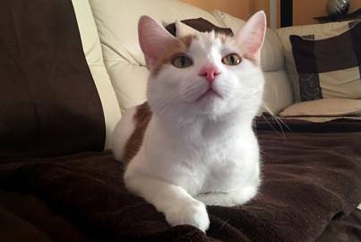 Miau-Arten Beitragsbild