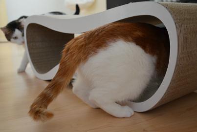 Katzenliege Lui Beitrgsbild