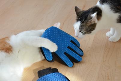 Beitragsbild Bürstenhandschuh Katze