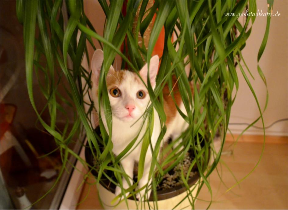 Keine pflanzen for Wohnung dekorieren mit katzen