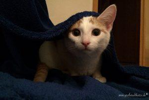Hypochonder: Katze frisst nicht mehr