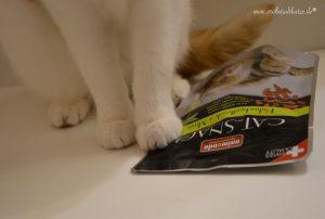 Weshalb CAT-SNACKs gut fürs Katzenklo sind