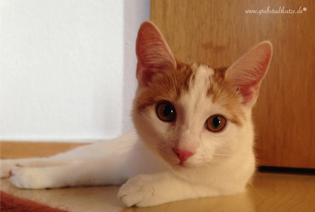 Kastration: Die Tablette muss in die Katze