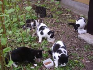 Sabine und die Katzenheimat