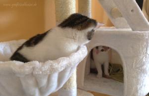 Rückblick: Kitten Zusammenführung