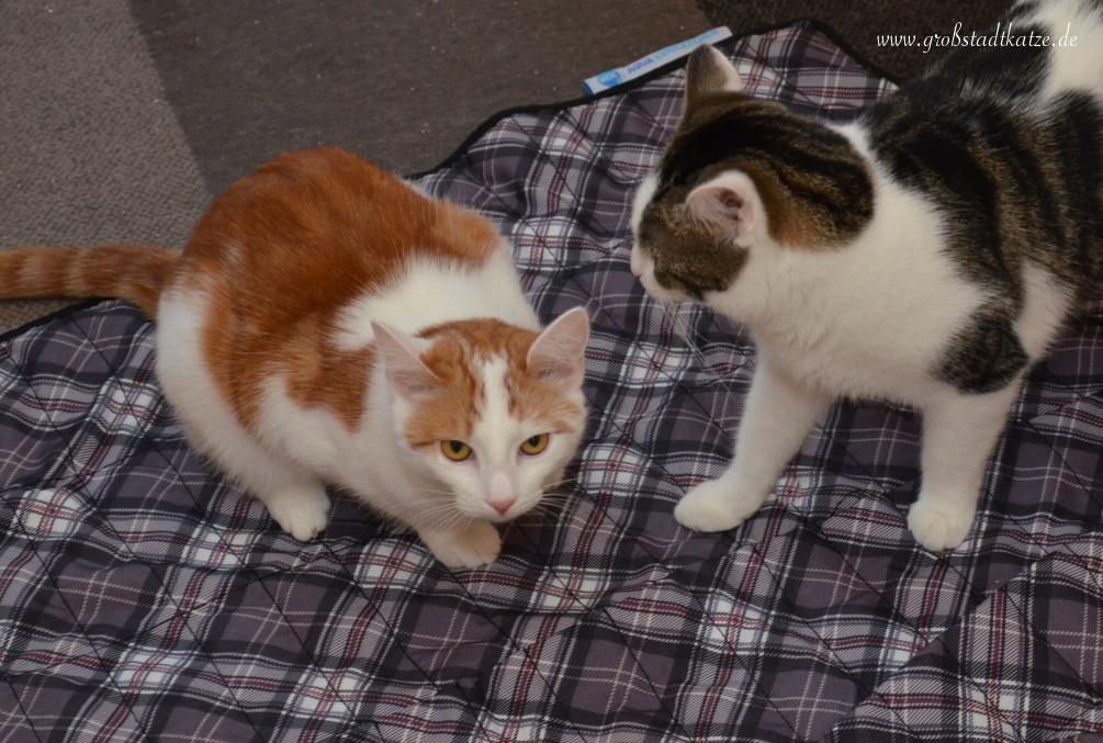 miau arten was bedeutet es wenn die katze miaut. Black Bedroom Furniture Sets. Home Design Ideas