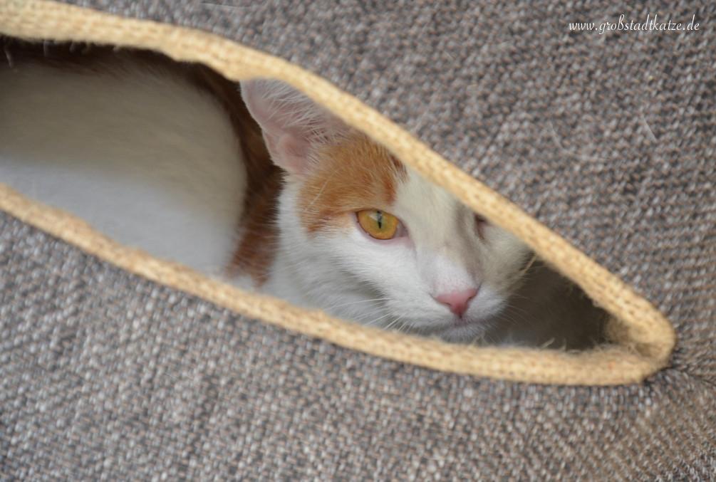 Katzenkugel