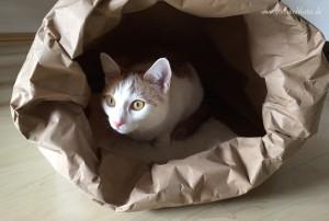 Recycelbare Katzenhöhle
