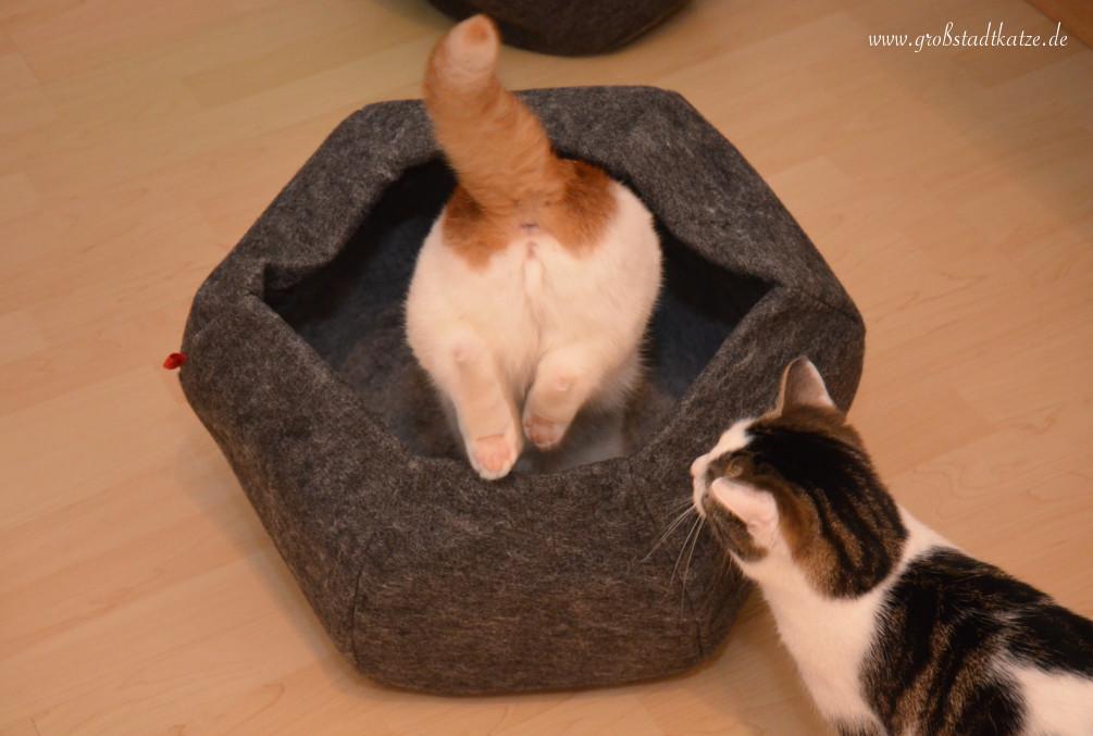 Katzenkugel_XL_beide