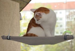 Schwebende Katze