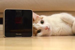 Katzenbesitzer 2.0