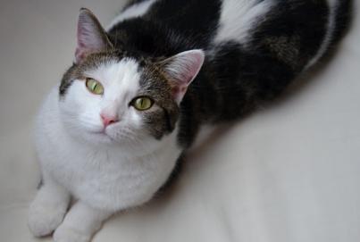 Katzenblogs