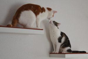 Lifehack: Mini-Kletterwand und Catwalk