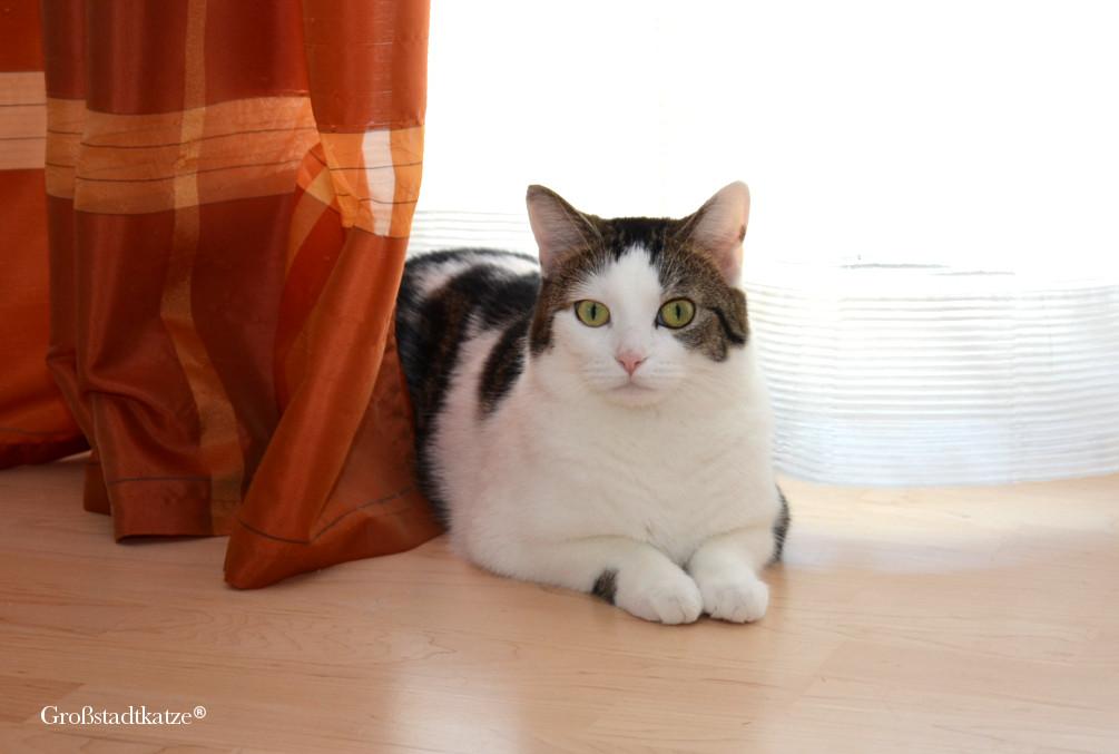 giftig f r katzen haushalt giftig f r katzen sogar kosmetika kann gef hrlich sein. Black Bedroom Furniture Sets. Home Design Ideas