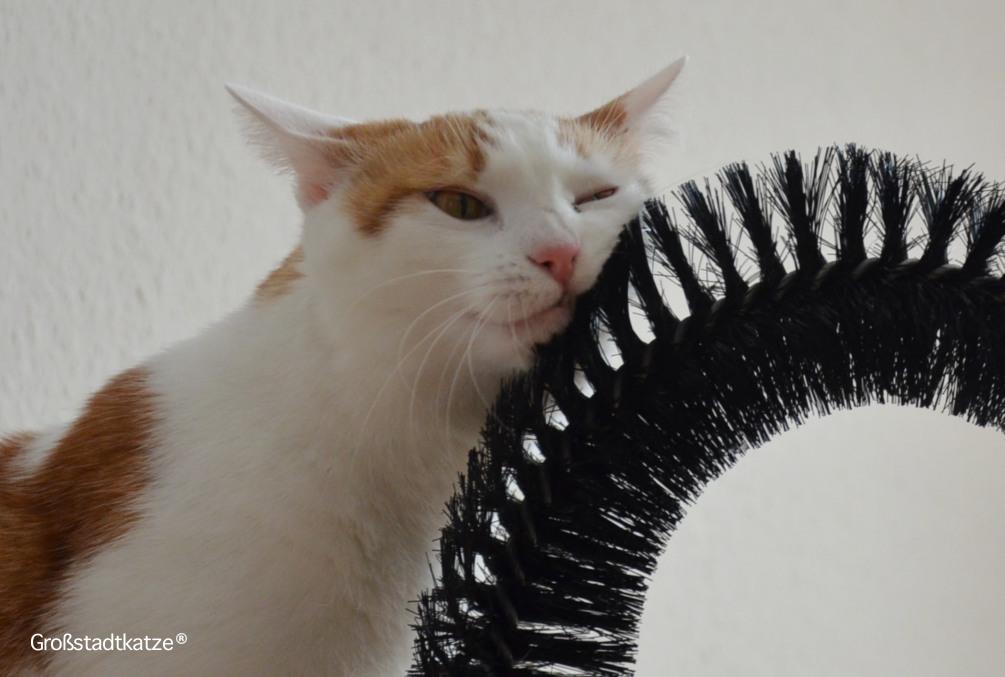 My-Petez-Massage-und-Enthaarungsbogen-für-Katzen-4