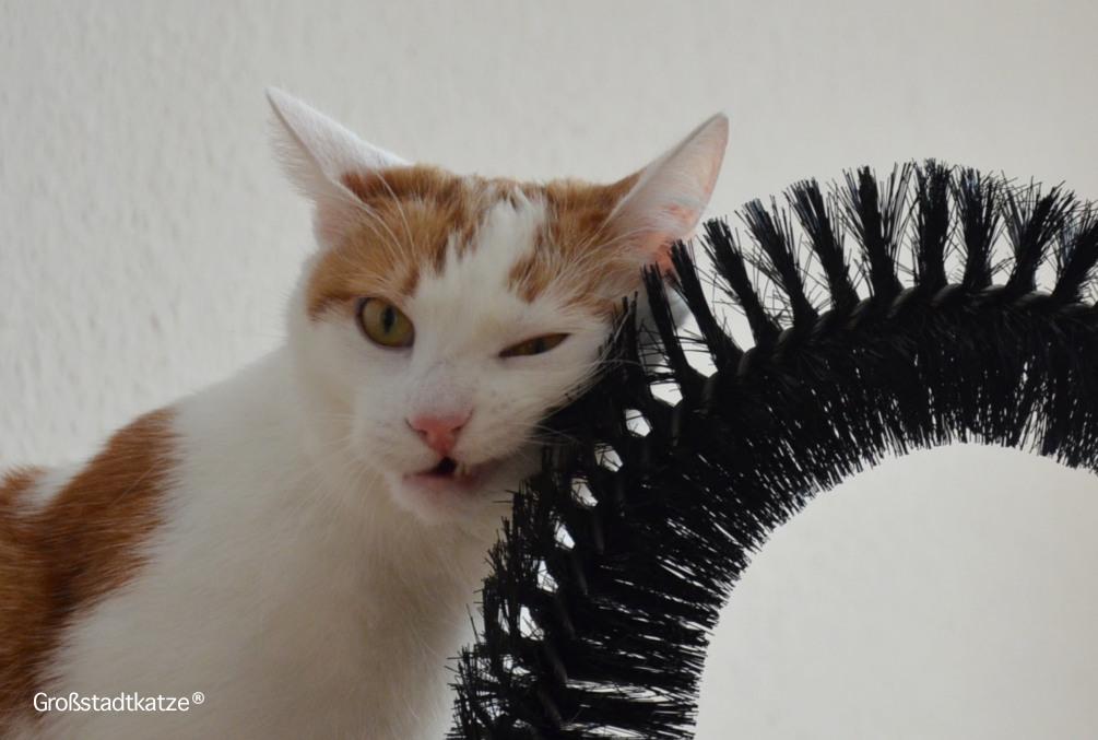 My-Petez-Massage-und-Enthaarungsbogen-für-Katzen-5