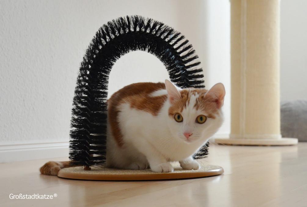My-Petez-Massage-und-Enthaarungsbogen-für-Katzen-8