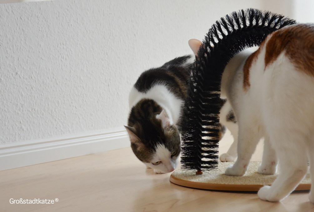 My-Petez-Massage-und-Enthaarungsbogen-für-Katzen