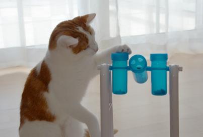 Trixie Cat Activity II Beitragsbild