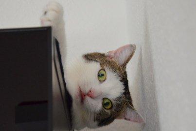 Haushalt giftig für Katzen