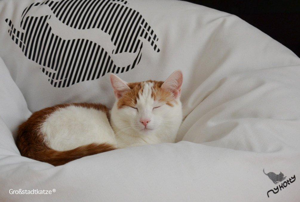 Designer Katzenbett EMI