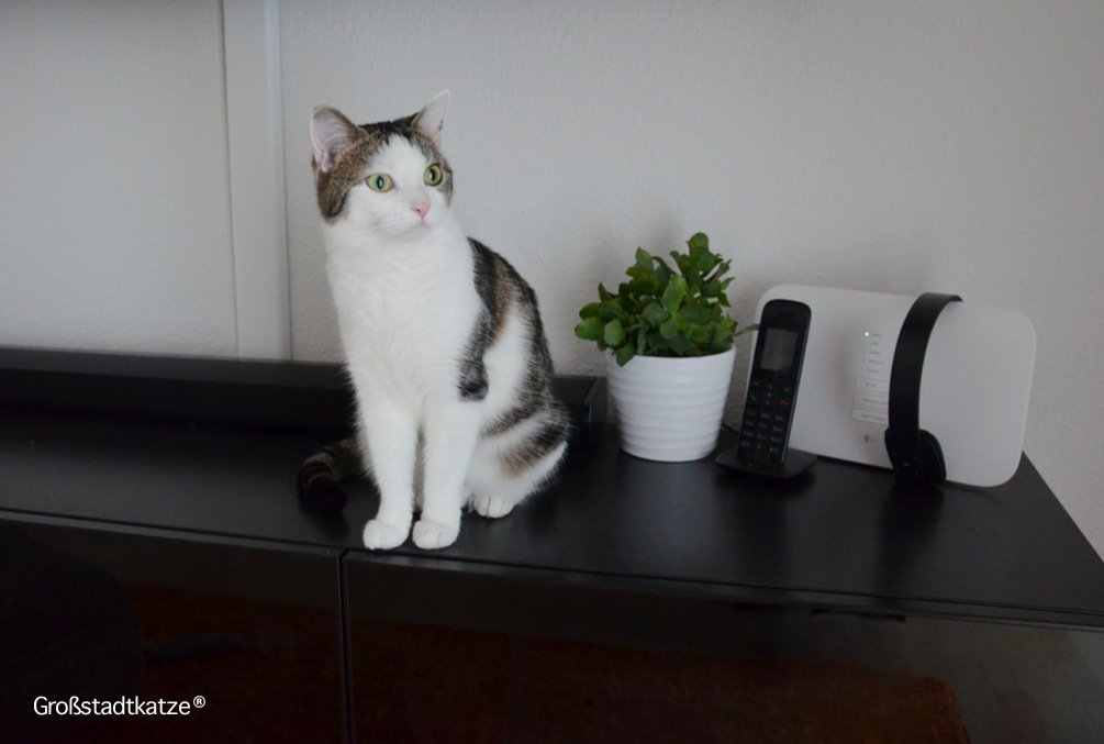 Ungiftige Zimmerpflanzen für Katzen | Ungifte Pflanzen Wohnung Katze