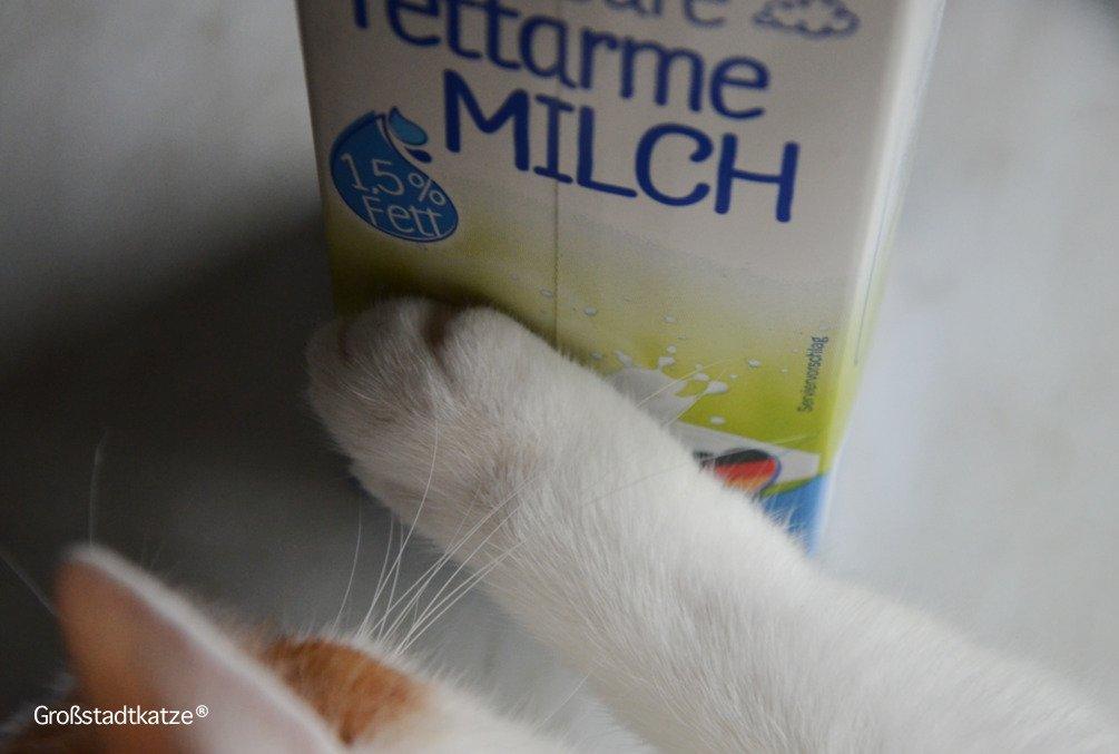 Katzen brauchen Milch