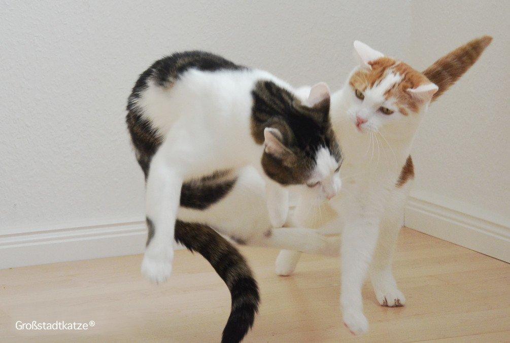 Katzen landen immer auf ihren Pfoten