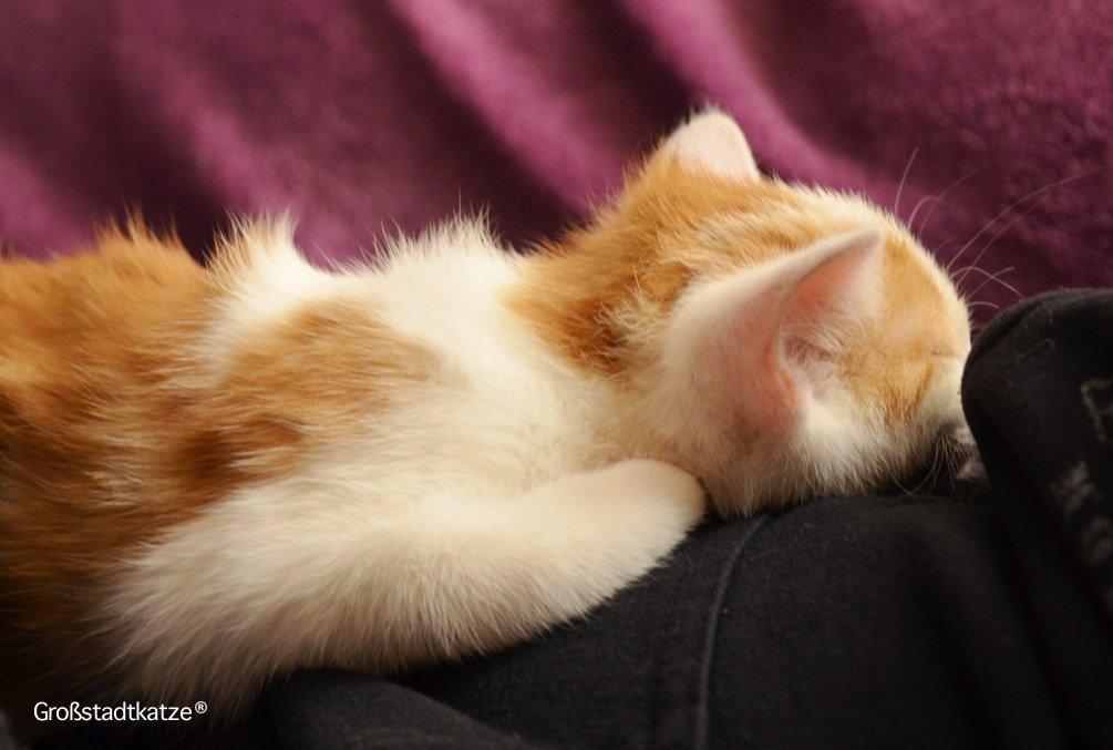 katzenmythen katze nicht gegen den strich streicheln katzen brauchen milch. Black Bedroom Furniture Sets. Home Design Ideas