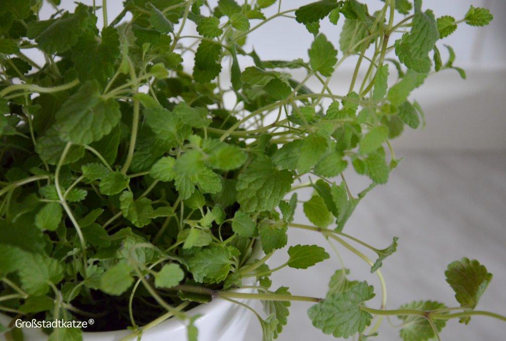 ungiftige zimmerpflanzen f r katzen ungifte pflanzen wohnung katze. Black Bedroom Furniture Sets. Home Design Ideas