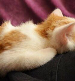 Katzen nicht gegen den Strich streicheln