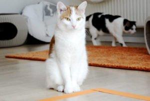 Catsquare