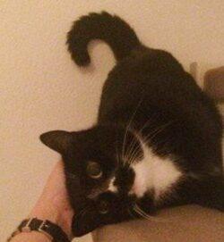 Stiftung Warentest Test Ergebnis Katzenfutter | Bestes Katzenfutter für 23 Cent