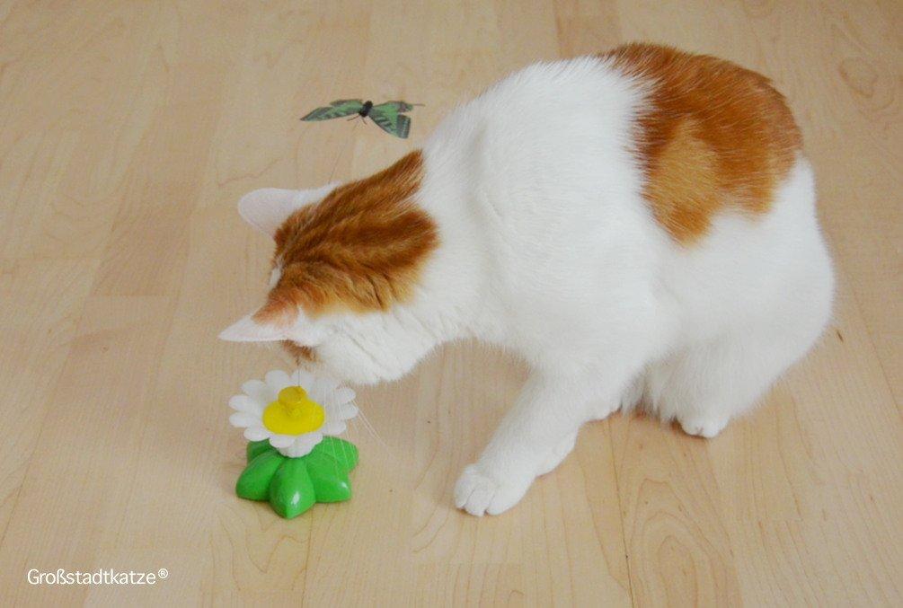 Schmetterling-Katzenspielzeug-11