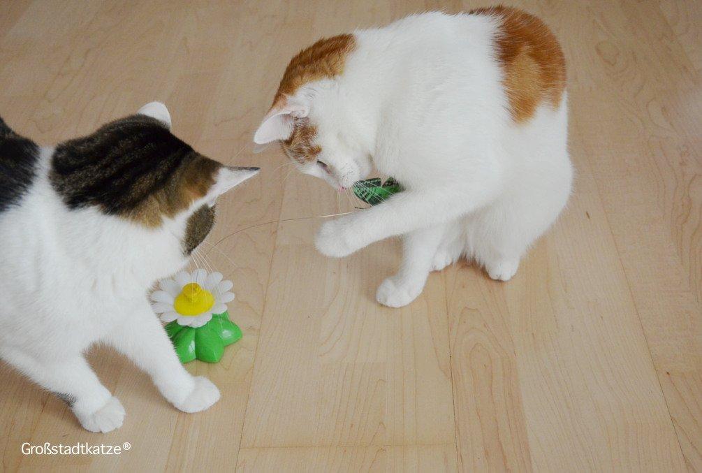 Schmetterling-Katzenspielzeug-12