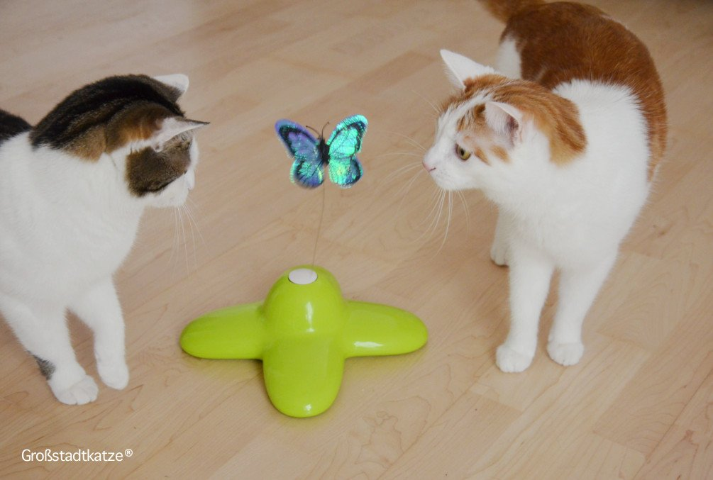Schmetterling-Katzenspielzeug-13