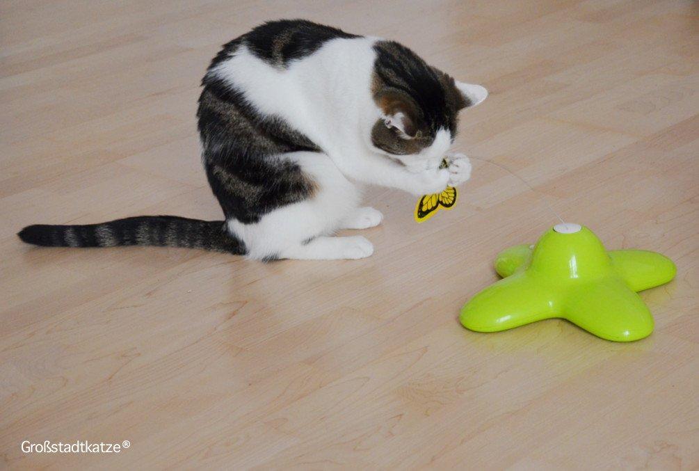 Schmetterling-Katzenspielzeug-2