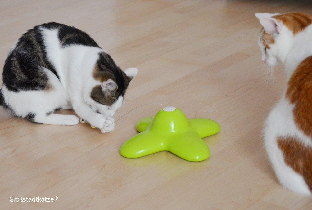 Schmetterling-Katzenspielzeug-3