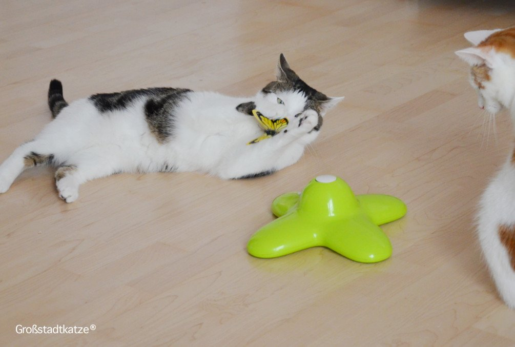 Schmetterling-Katzenspielzeug-4