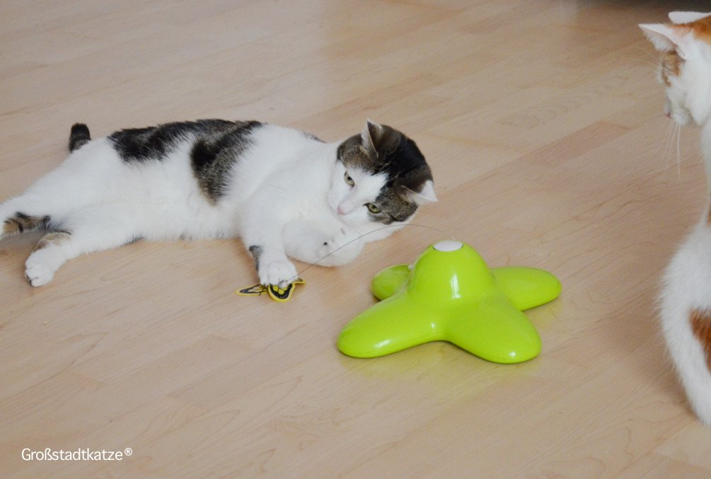 Schmetterling-Katzenspielzeug-5