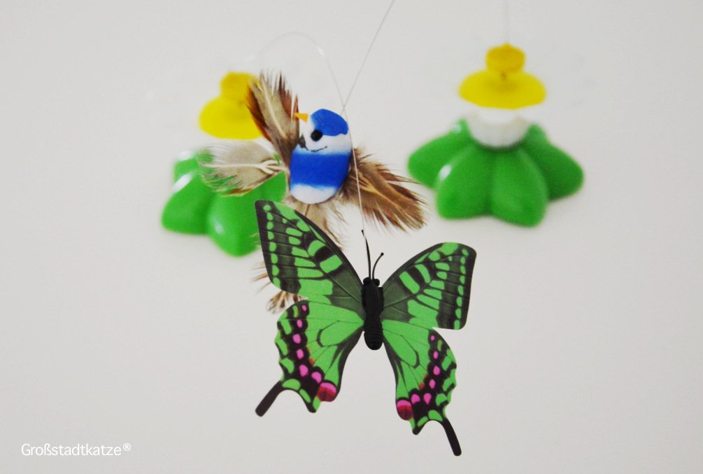 Schmetterling-Katzenspielzeug-6