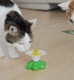Katzenspielzeug Schmetterling | Erfahrung Katzenspielzug Funny Butterfly