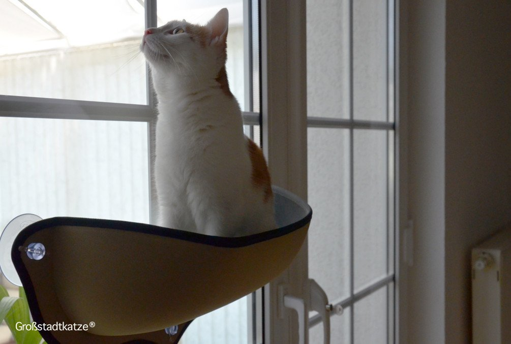 Window-Cat-Bed-3