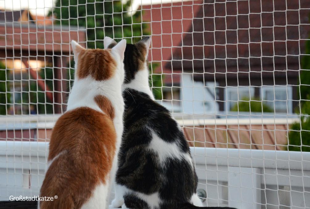 Wespen Gefährlich für Katzen