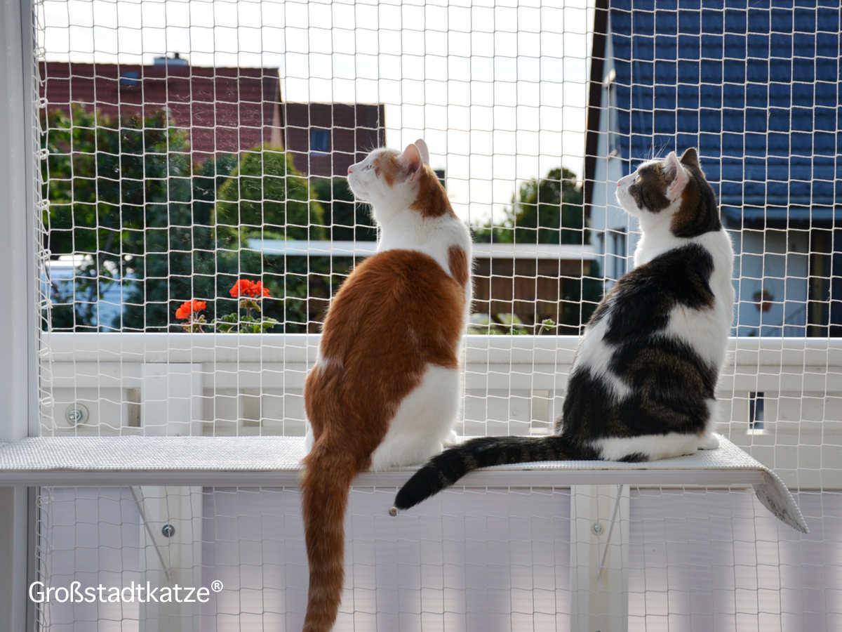 Katenhochsitz Blick über Die Balkonbrüstung Leben Mit Katzen