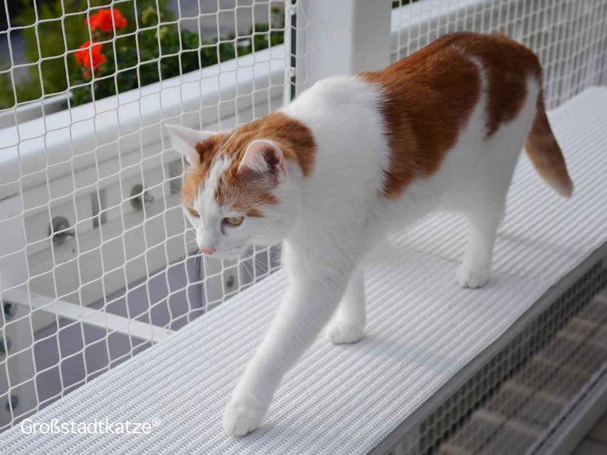 katenhochsitz blick ber die balkonbr stung leben mit katzen. Black Bedroom Furniture Sets. Home Design Ideas