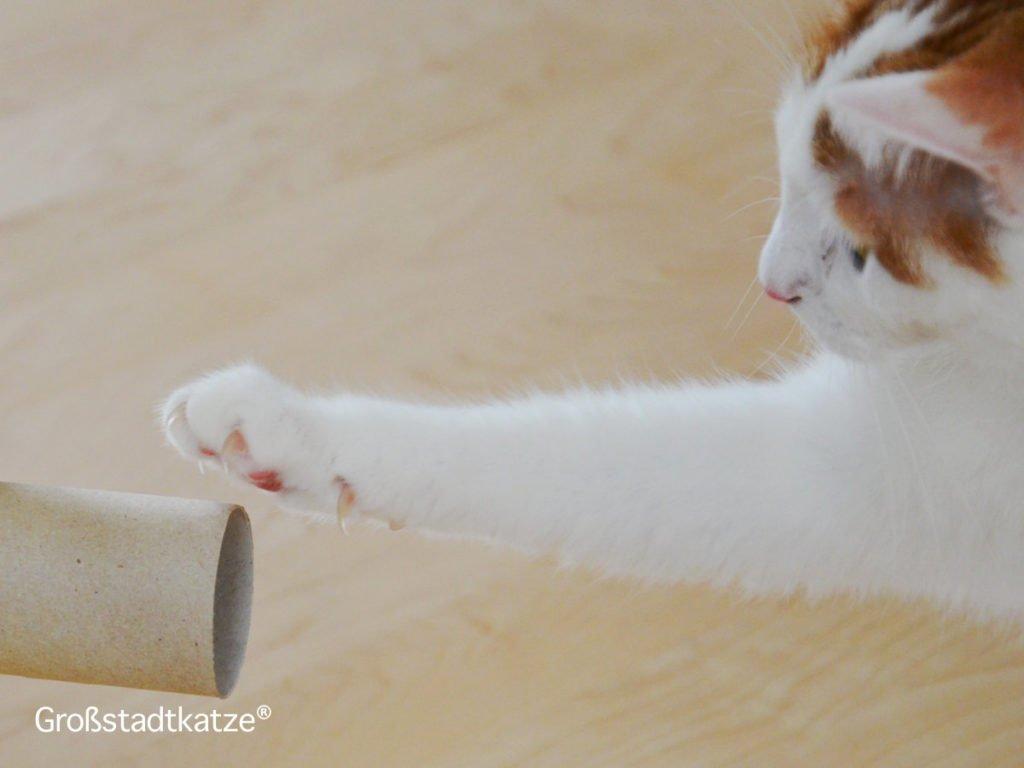 Krallen schneiden Katze | Notwendig? | Eigenschaften Katzenkrallen
