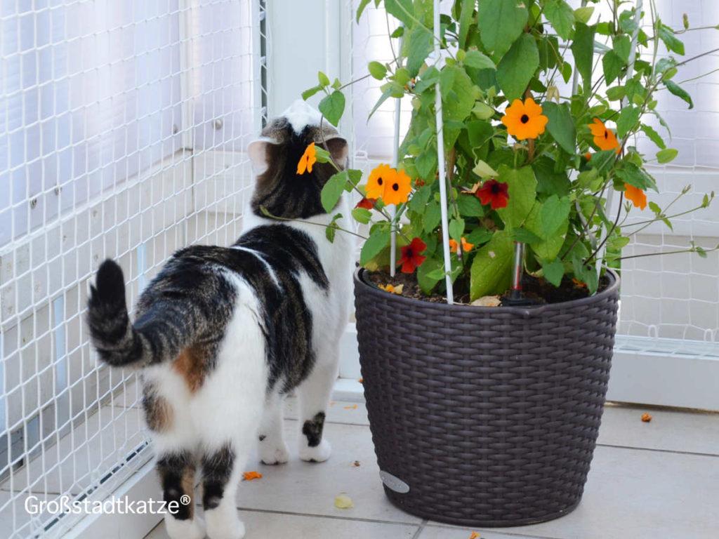 Terassenpflanzen-1024x768